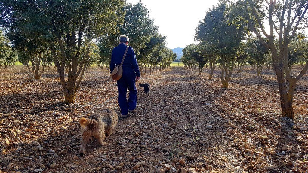 Truffle hunting and Desert Crossing
